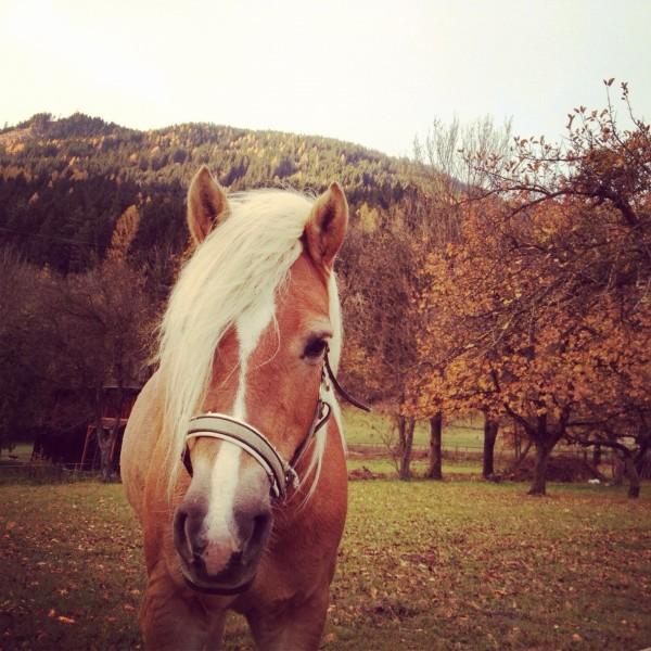 Ein Pferd im Herbst