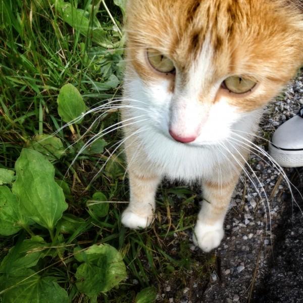 Diese Katze klagt an!