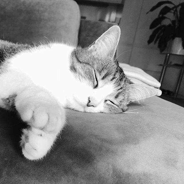 Erschöpft nach drei Runden Laserpointerjagen…#catcontent #catsofinstagram #blackandwhite #latergram #sleepingbeauty #meow