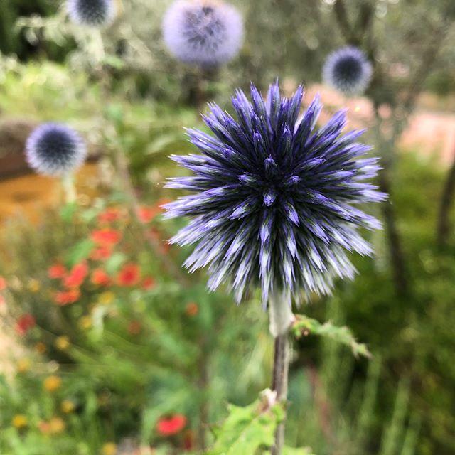 Flowers of Tulln