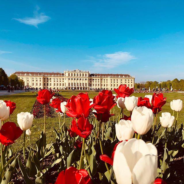 Frühling in Schönbrunn