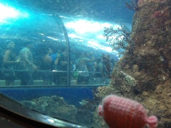 Das Häkelschwein schaut sich Menschen im Zoo an