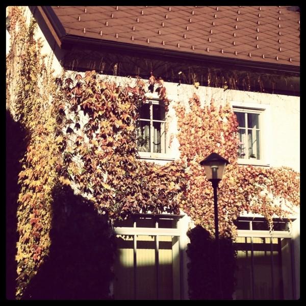 Herbstlich bewachsen